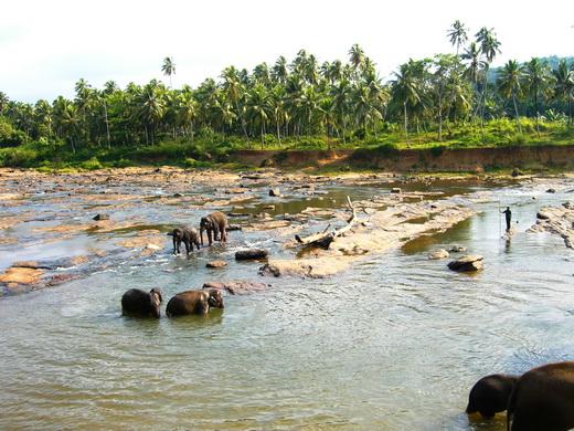 פילים סרי לנקה