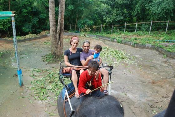 רכיבת פילים