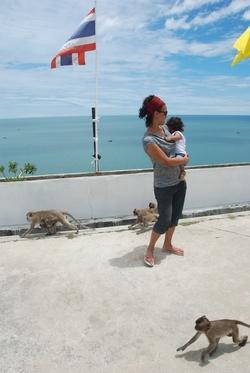 קופים בתצפית בהואה הין